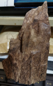 Agarwood/Aloeswood Oud chips, Burma 1 piece 27 grams