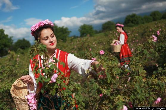 Pure Bulgarian Rose 12cc