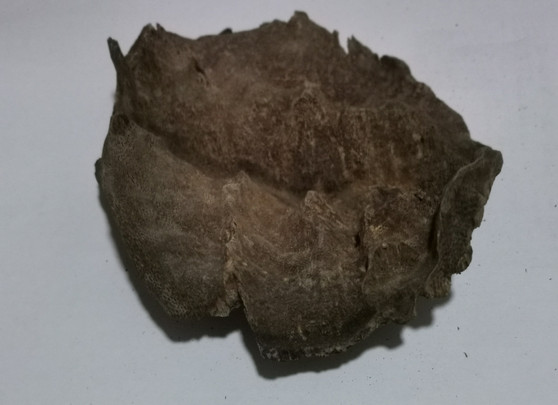Agarwood/Aloeswood Oud chips, Burma 1 piece 19 grams Mushroom