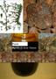 Pure Myrrh oil 12ml - non alcoholic