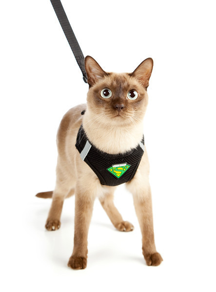 cat-harness.jpg