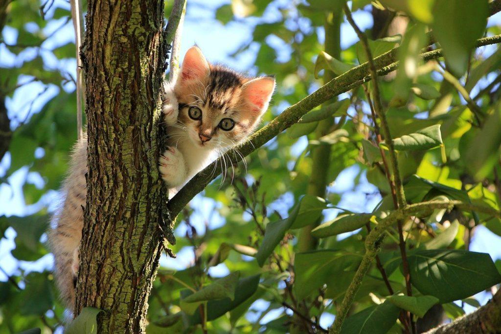 cat-kitten-tree-1647775-1024x682.jpg