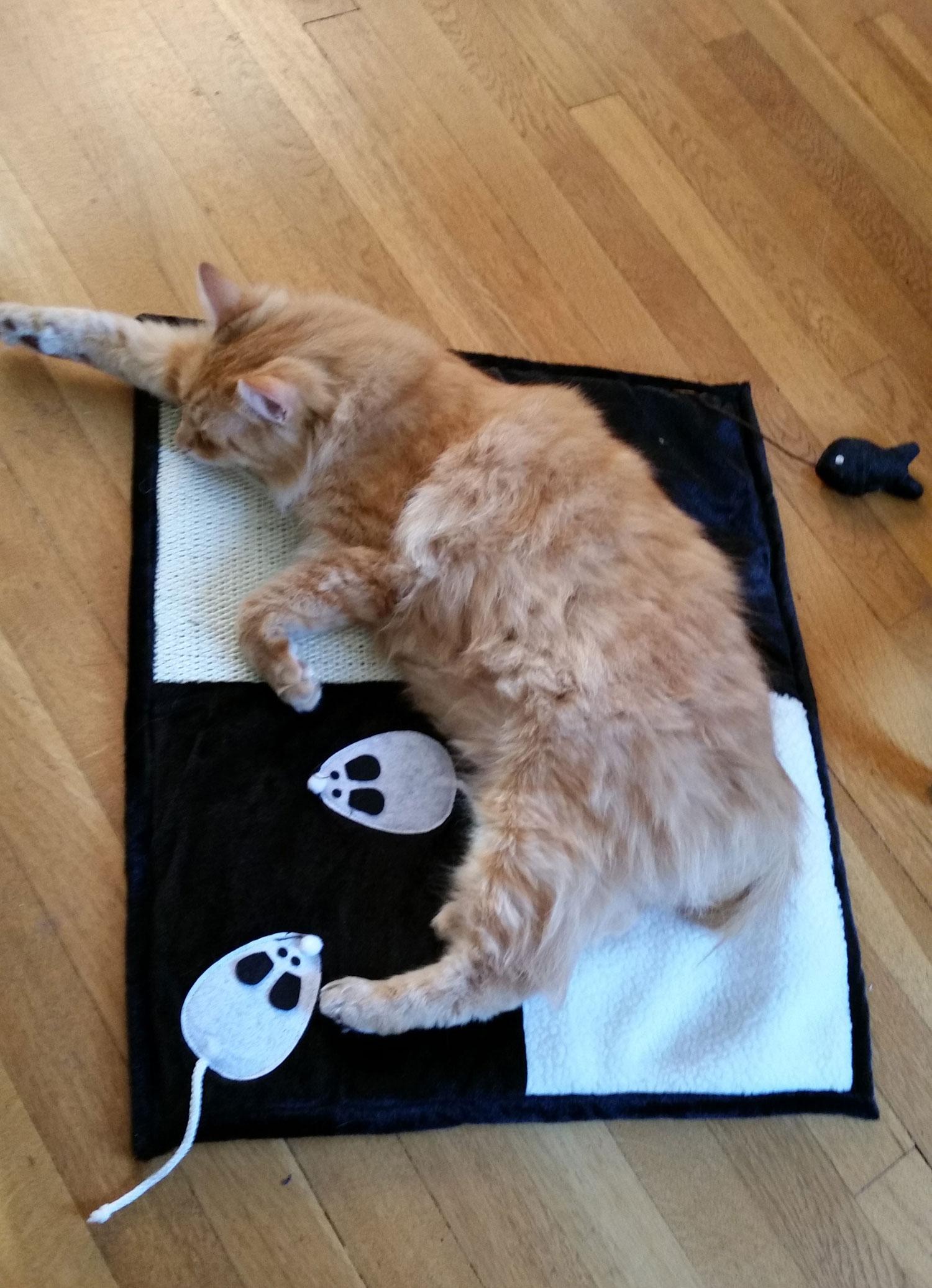 cat-mat-tucker.jpg