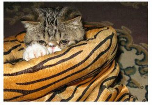 lepard-cat-bag.jpg