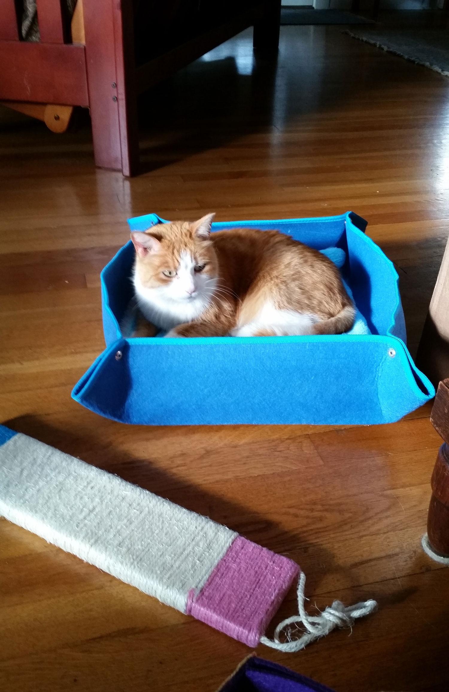 lg-cat-bed-buddy.jpg