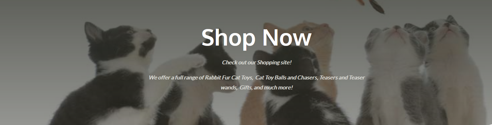 shop-now-pic.png