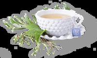 Steep Echo Tea Cup