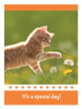 KJV Boxed Cards- Children's Birthday, Fuzzy friends by Heartwarming Thoughts