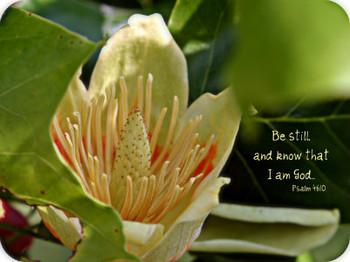 Be Still (Flower)  - 5 Blank Notecards