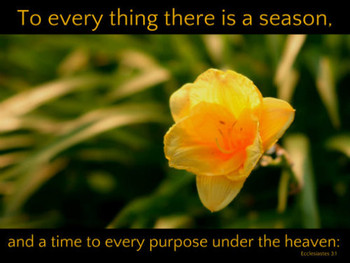 To Every Thing There is a Season  - 5 Blank Notecards