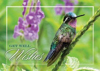 KJV Boxed Cards - Get Well, Hopeful Hummingbirds