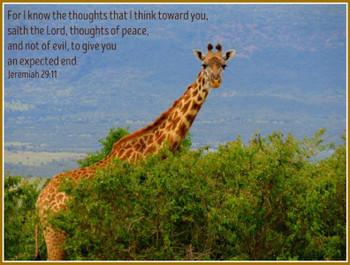 Jeremiah 29:11 - 5 Blank Notecards