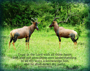 Trust in the Lord (gazelles) - 5 Blank Notecards