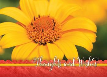 KJV Boxed Cards - Encouragement, Hope Blooms