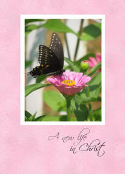 "A New Life in Christ - 5"" x 7"" KJV Greeting Card"
