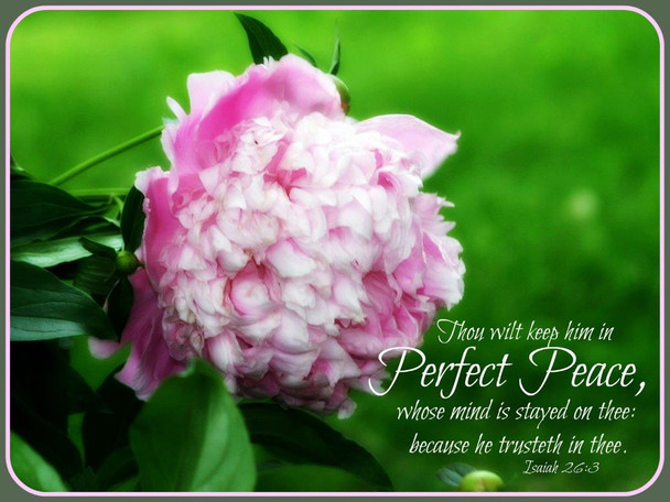 Perfect Peace (Peony) - 5 Blank Notecards