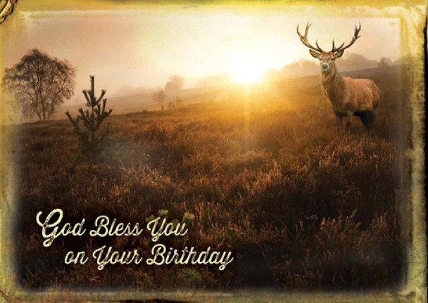 KJV Boxed Cards - Birthday, Wild Adventures
