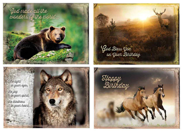KJV Boxed Cards - Birthday, Wild Adventures