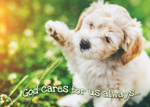 KJV Boxed Cards - Encouragement, Fur Baby Love