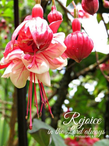 Rejoice Always - 5 Blank Notecards