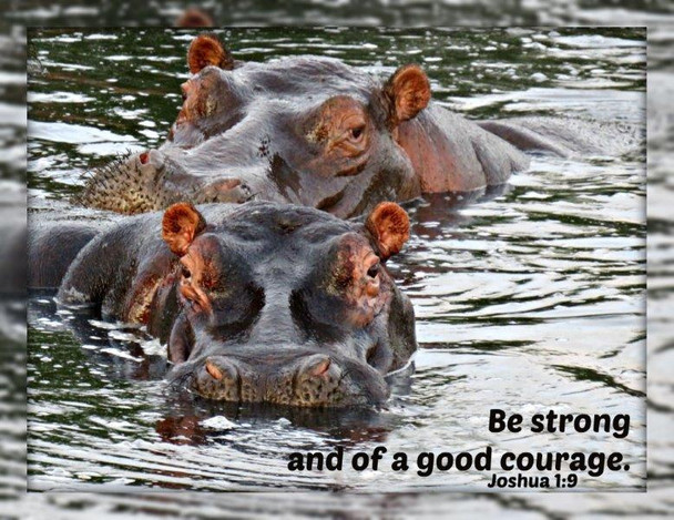 Be Strong (hippos) - 5 Blank Notecards