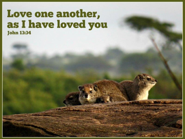 Love One Another - 5 Blank Notecards
