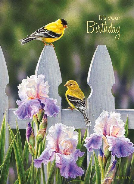 KJV Boxed Cards - Birthday, Backyard Beauties by Heartwarming Thought