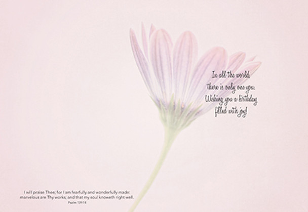 KJV Boxed Cards - Birthday, Daisy by Heartwarming Thought