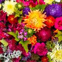 Bloom Synergy Blend