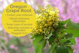 Monograph: Oregon Grape Root