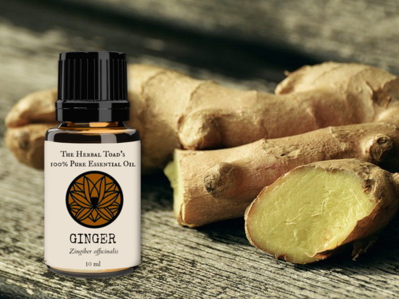 Ginger Essential Oil Benefits and Recipes - The Herbal Toad