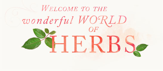 pages-category-welcome-to-the-world-of-herbs.jpg