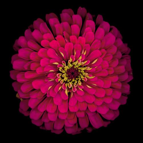 Deep River Flower