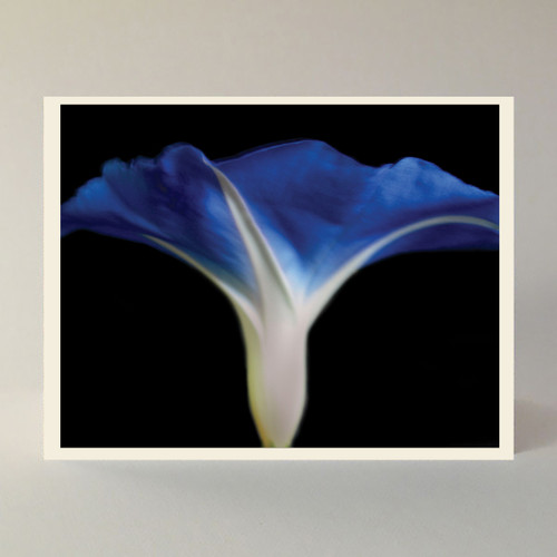 """Box of 10 A-2 size note cards, featuring a Jan Cummings Good photo. Designed and printed in our home studio.  Inside message reads """"A morning-glory at my window satisfies me more than the metaphysics of books."""" Walt Whitman"""