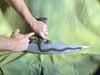 X-Men First Class, Axazel's Dragon Sword, Very Detailed, Very Cool