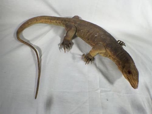 Raiders Of The Lost Ark, Indiana Jones Lizard Prop