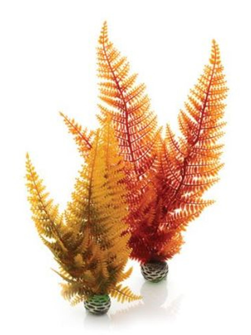 Autumn Fern set of 2