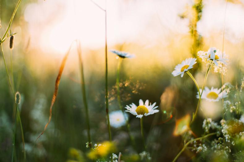 3 Natural Remedies for Seasonal Allergies