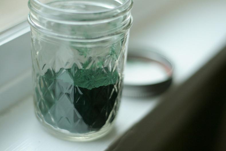 All About Algae!