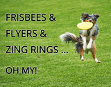Frisbees, Flyers, & Zing Rings…Oh My!