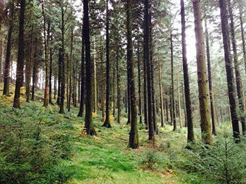 cwmcarn-trees-small.jpg