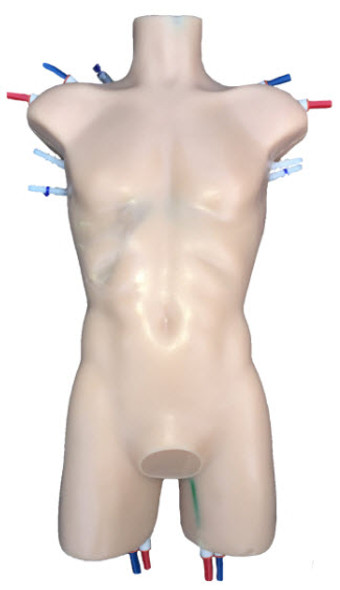 Adult Human Torso – Advanced R&D