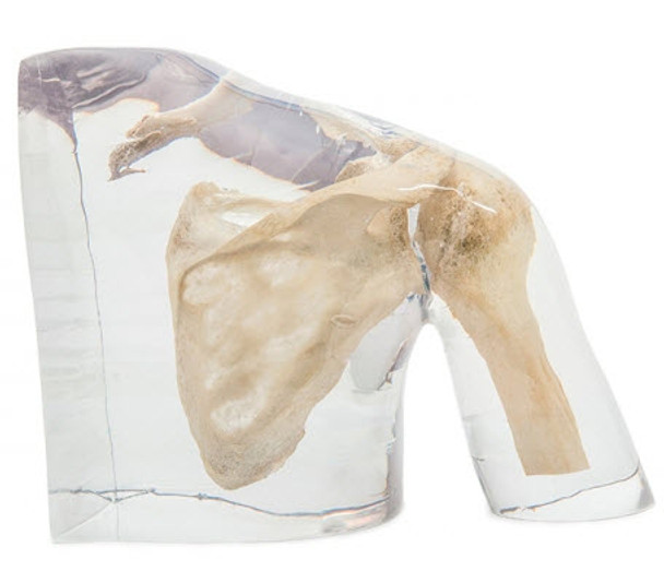 X-Ray Phantom Shoulder - Transparent & Opaque