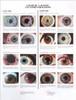 Laminated Eye Chart  Spanish