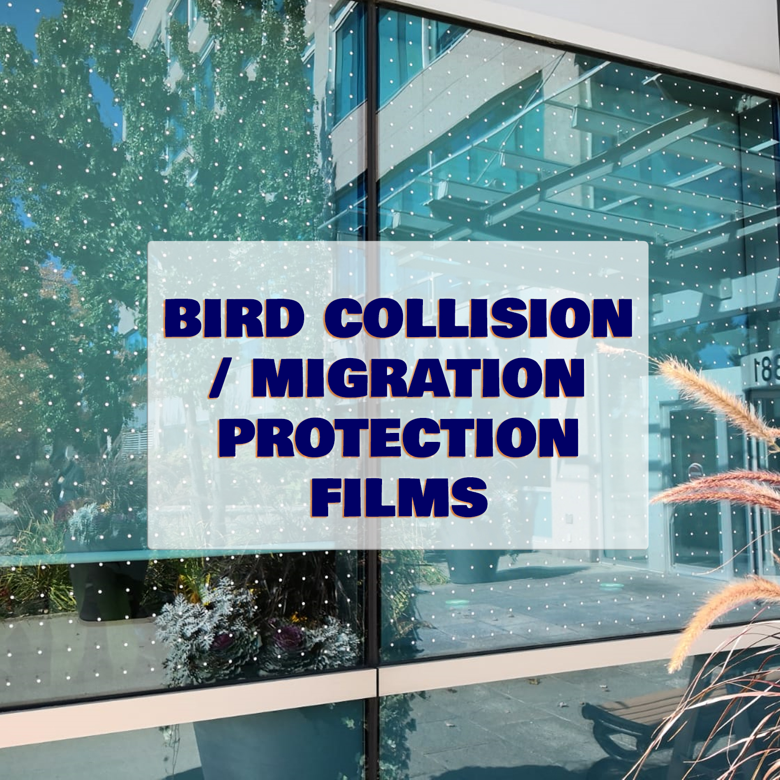 bird-migration-collision-protection-catgory