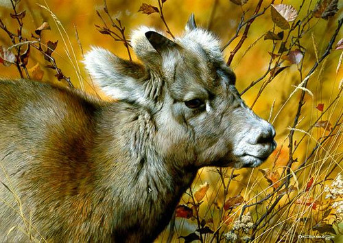 "Carl Brenders; ""Mountain Baby - Bighorn Sheep"""