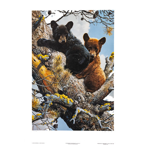 "Carl Brenders; ""High Adventure - Black Bear Cubs"" Thumbnail"