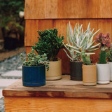 Hasami Porcelain Flower Pot - Matte Natural