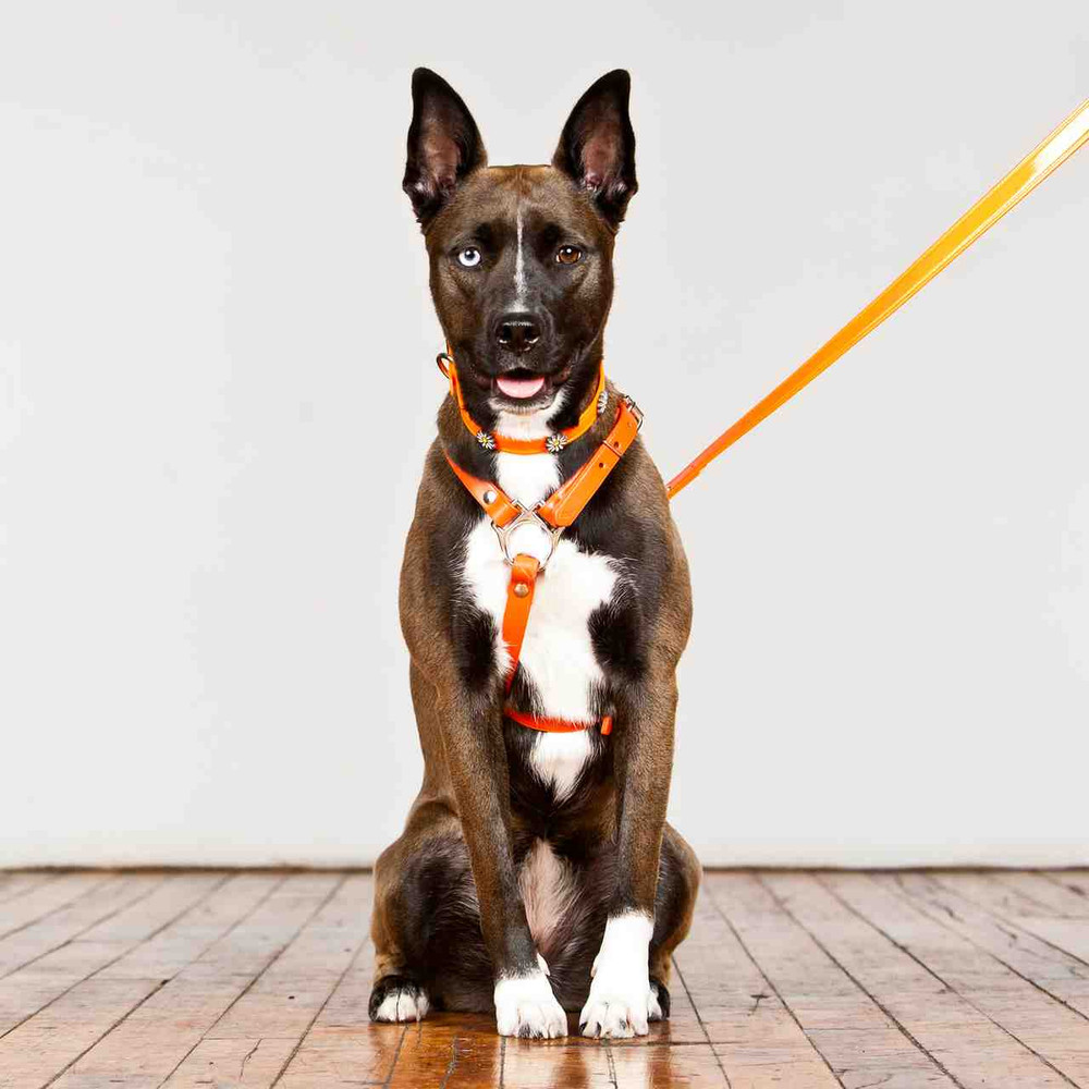 H Style Harness in Leather: Dog