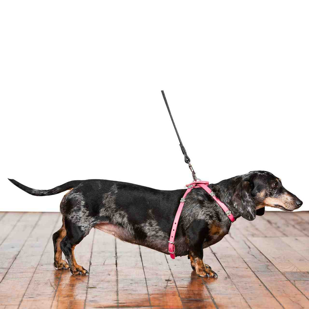 Figure 8 Harness in Leather: Dog